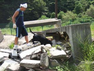 救助犬3.JPG